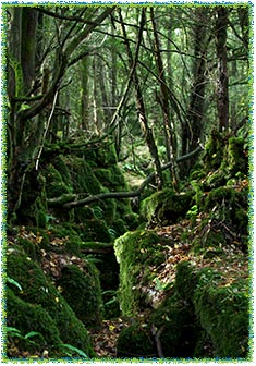 Visit Puzzlewood throughout the year