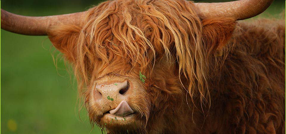 Get up close to our animals including the Highland cattle...
