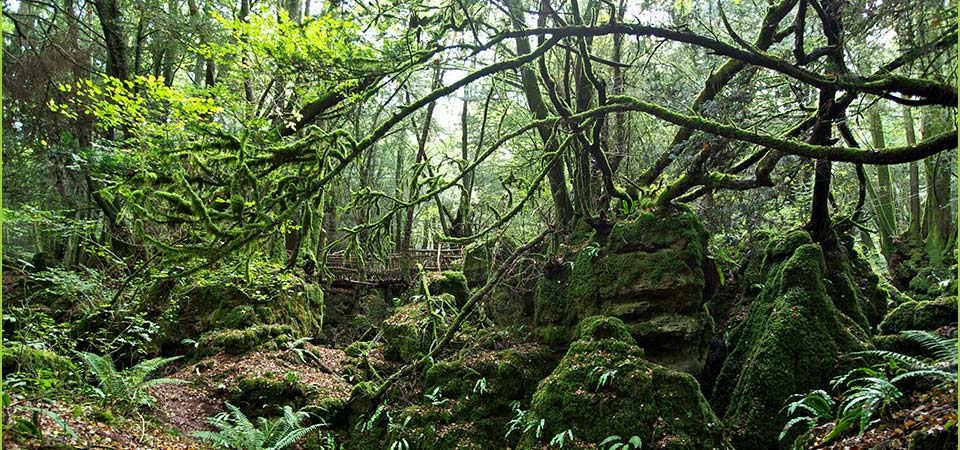 Due to the narrow paths and uneven steps throughout Puzzlewood, we are unable to allow pushchairs onsite...