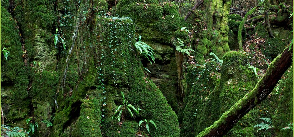 Puzzlewood welcomes visitor and commercial photography...